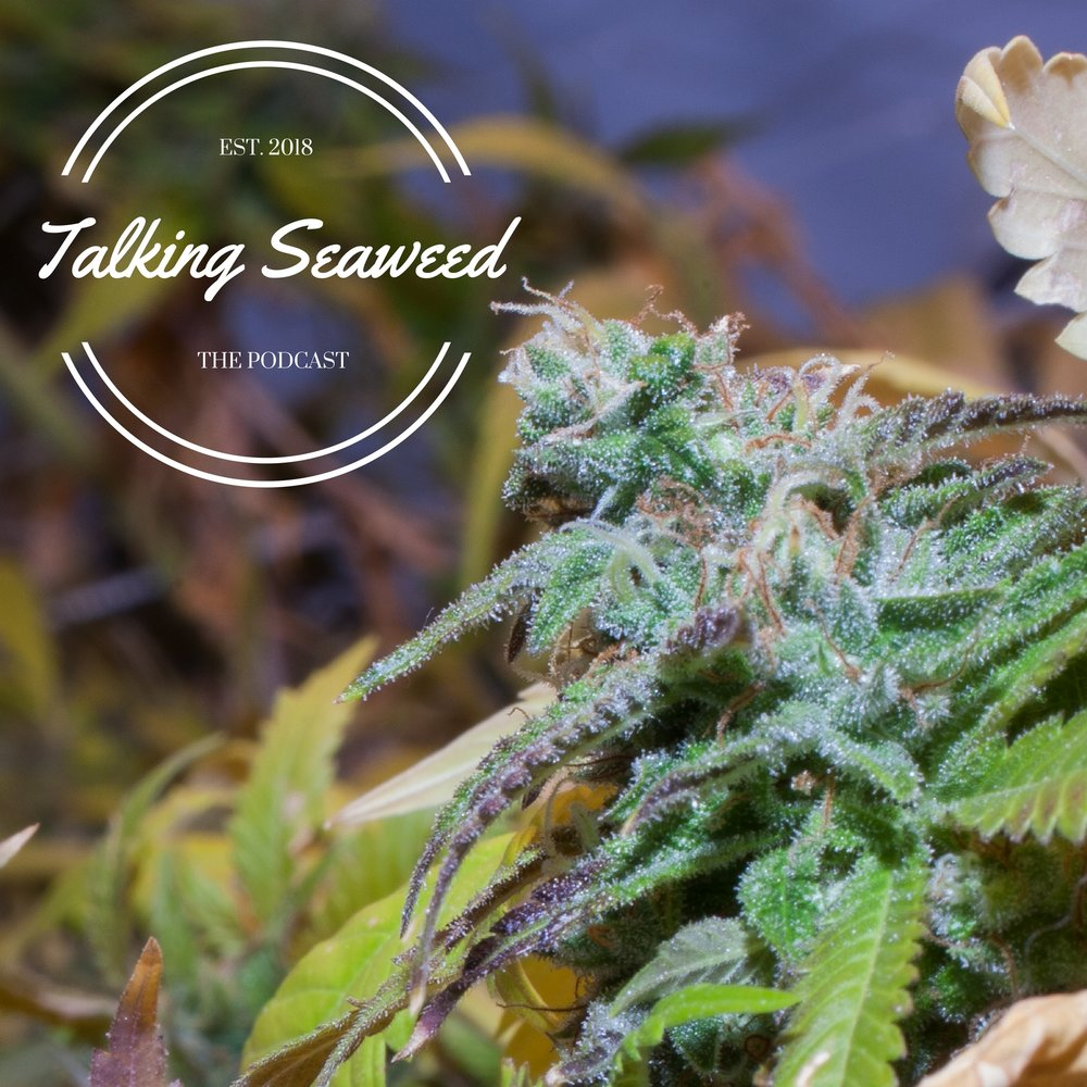 TALKING SEAWEED PODCAST - Click the image to watch/stream/download the Talking Seaweed Podcast.