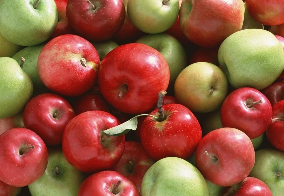 apples-1[1]