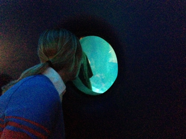 Looking for the whales at Shedd Aquarium