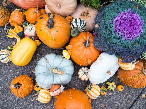 10 Low Cost Things to Do This Fall