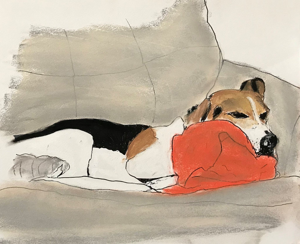 DogWithRedPillow.jpg