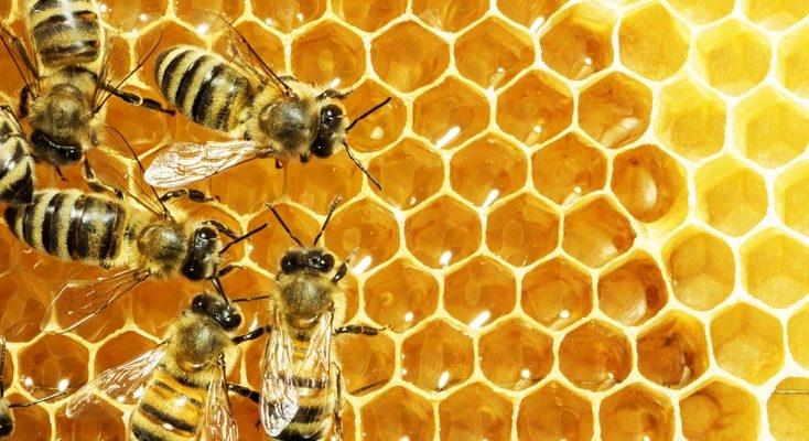 Bee Tours.jpg