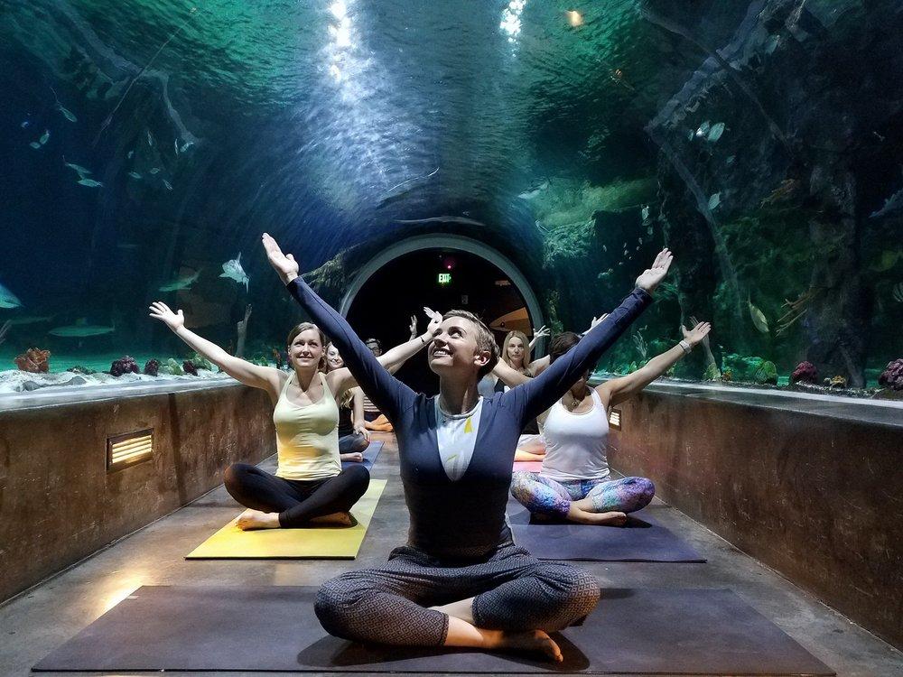 yoga meditation sharks utah amanda jones