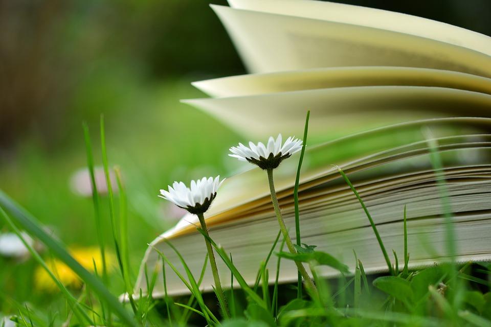 book-2304388_960_720.jpg