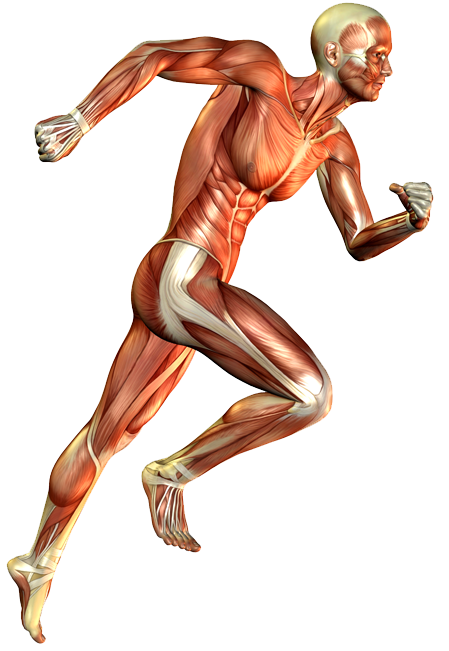 heal-to-toe-runner-1024x800px-crop-u1363.png