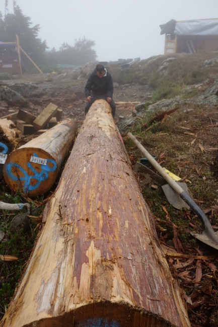 The logs in this picture were kindly donated by Tla-o-qui-aht First Nation, whose traditional territory the hut is being built upon (the hut site also overlaps with the territories of Ucluelet First Nation and Tseshaht First Nation). These Yellow Cedar trees will form the hut's front posts.