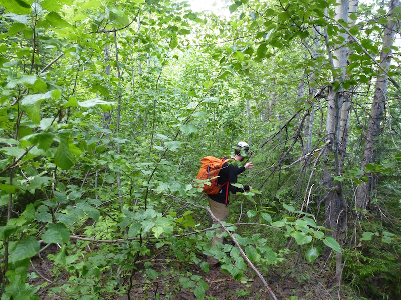Nathan Dahl fighting his way through the brush during a recon mission on the trail. Photo by Jeff Stewart.
