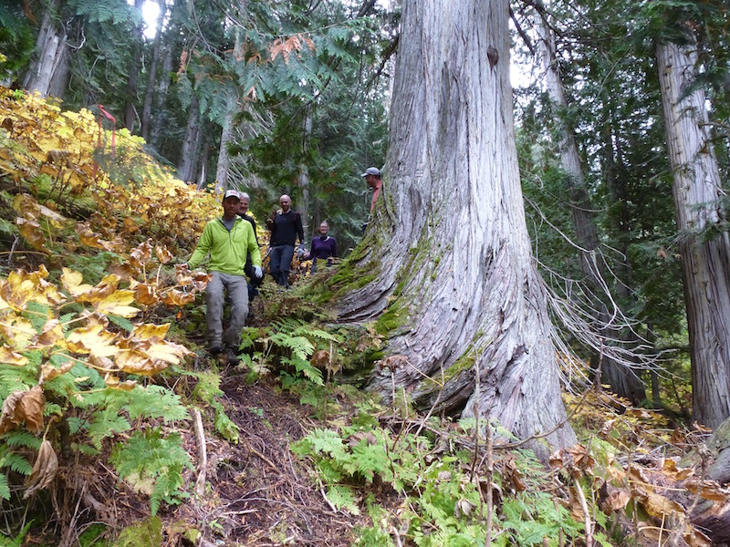 A happy crew in the old growth where a little respite from alder clearing was welcomed. Photo by Jeff Stewart.