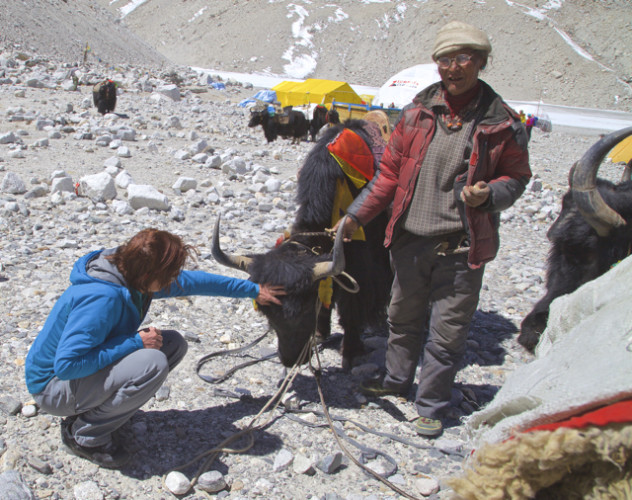 For some reason, I'm the only person in all of base camp who wants to pet the yaks. Photo by Zhangbu Sherpa.