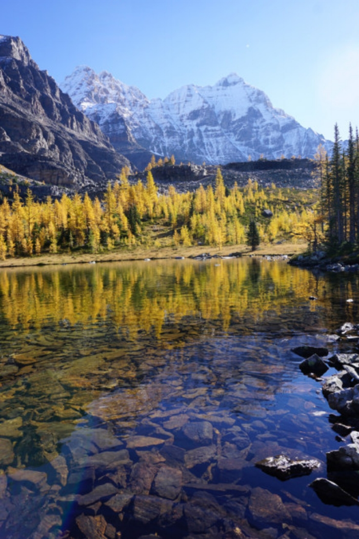 The larches of Lake O'Hara. Photo by Richard Campbell.