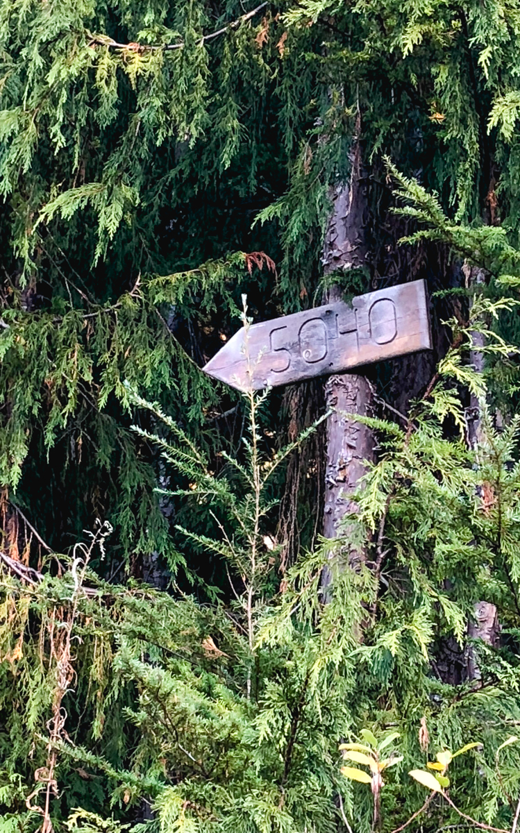 This way to peak 5040 and the hut. 10km up a logging road you dive into the dense forest and an uphill grind typical of the coast.