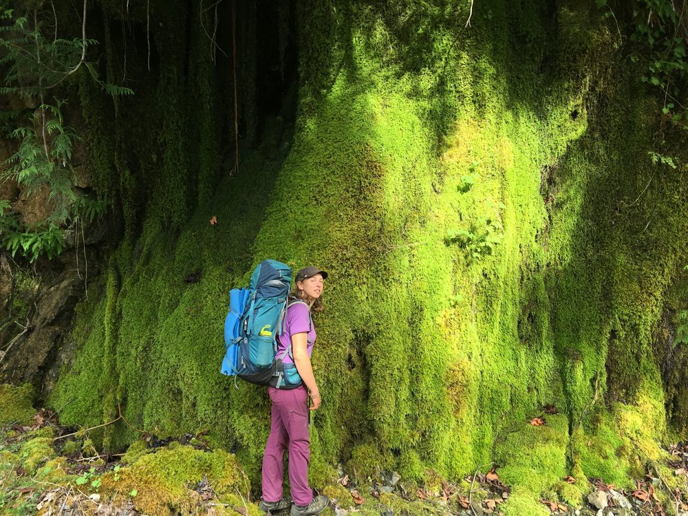 A dripping wall of moss found on a dry day