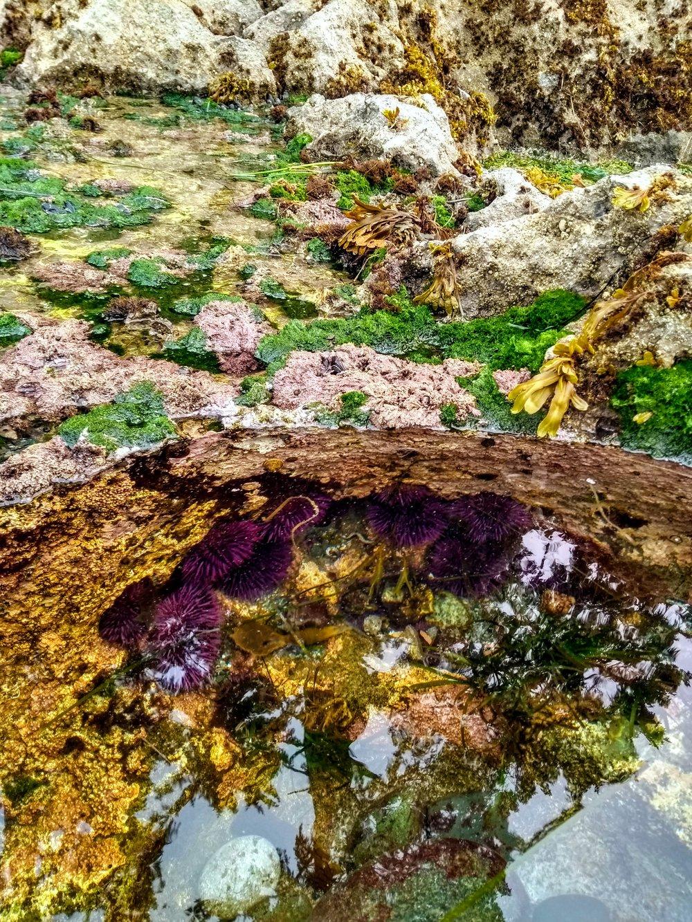 Tide Pools along the North Coast