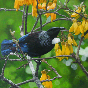 Lunchtime for a Tui