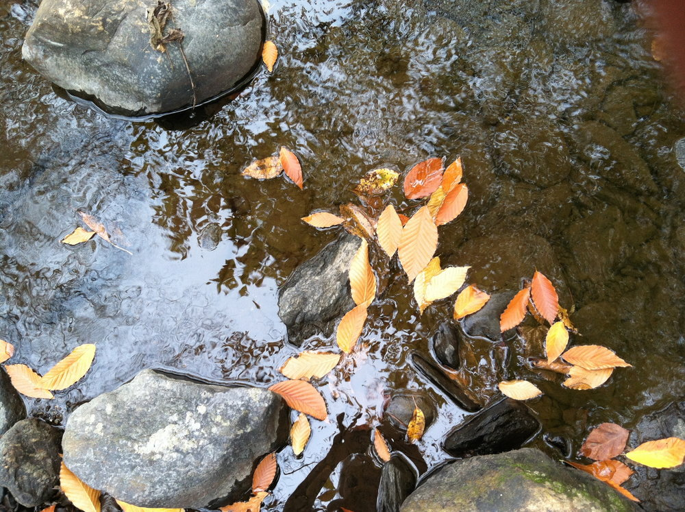 Fall leaves in stream.jpg
