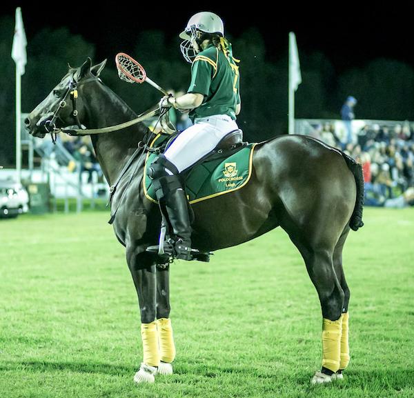 Polocrosse horse.jpg