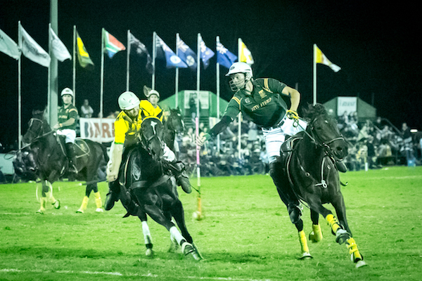 Polocrosse horses playing.jpg