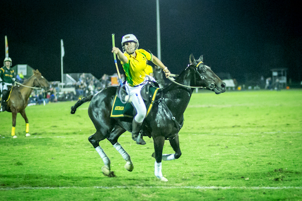 Polocrosse horse playing.jpg