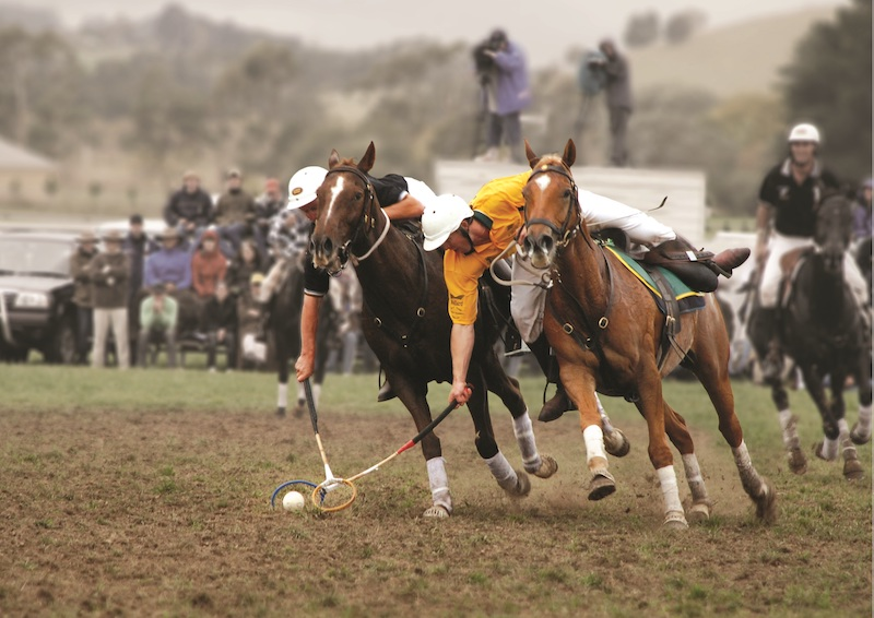 Australian Stock Horse playing polocrosse.jpg