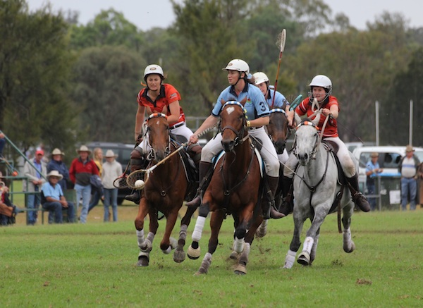 Australian stock horses playing polocrosse.jpg