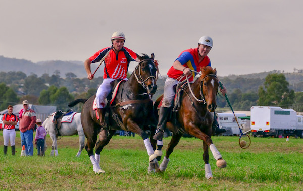 Member of the Australian Polocrosse World Cup Team, Lance Anderson, in action riding Australian Stock Horse EDENHOPE GRACE