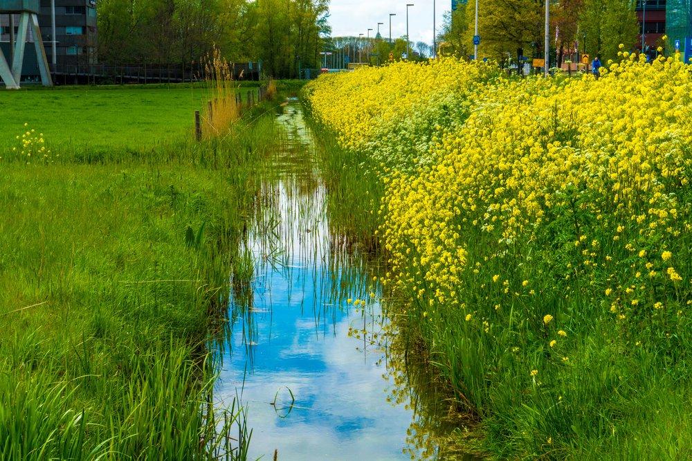flower river bank-1.jpg