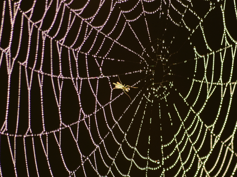 Insect in Spider Web