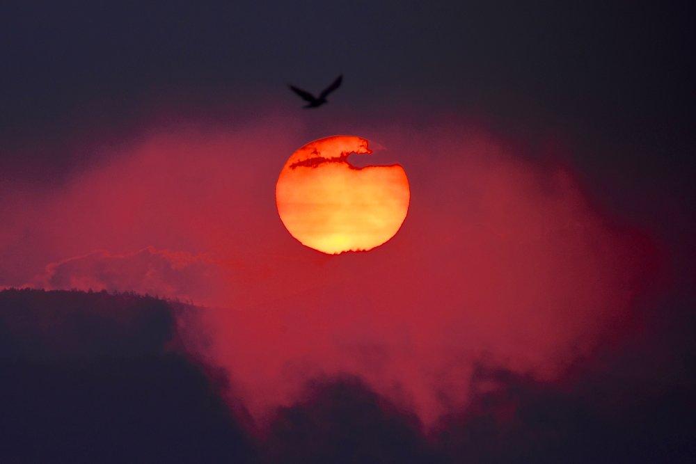 Bird at Pink Sunrise