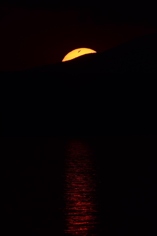 Bird in Setting Sun over Lake Champlain