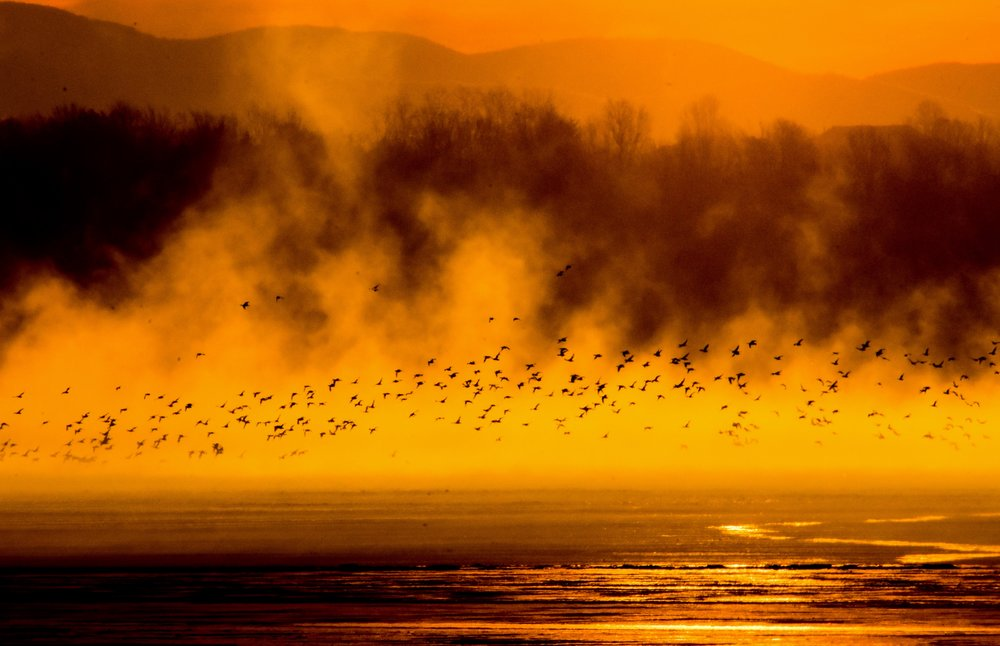 Geese and Steam over Lake Champlain at Sunrise_2