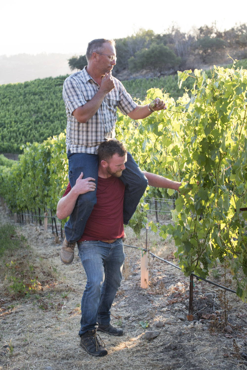 Winemaker Steven McCall lending a hand to vineyard manager Chris Bowland in the vineyard.
