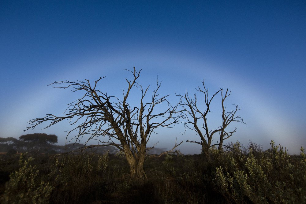 A fogbow caused by morning mist, Caiguna, Western Australia.