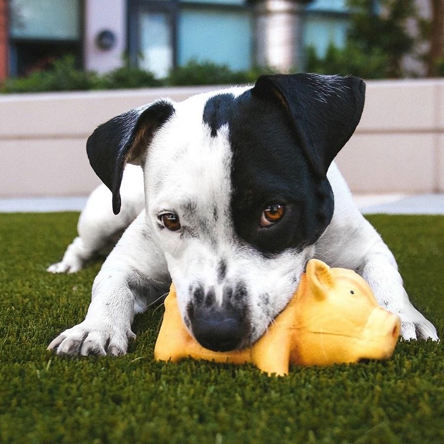 dog-bundles