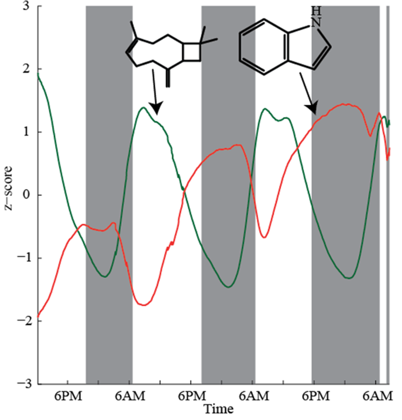 Time traces for β caryophyllene and indole illustrate a typical diurnal and nocturnal pattern.