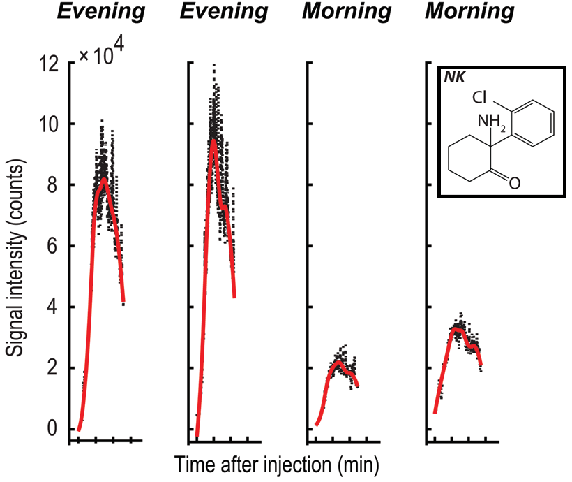 Metabolism of norketamine (NK) depending on internal time, two measures in the evening and another two in the opposite circadian phase.