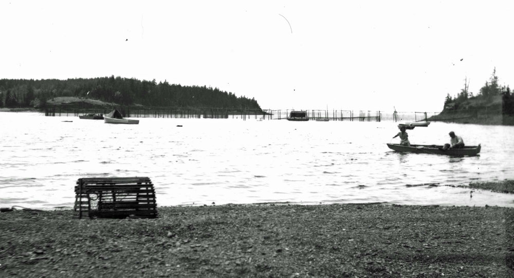 Fishing weir in Bartlett's Harbor, 1950s – Photo courtesy of the North Haven Historical Society