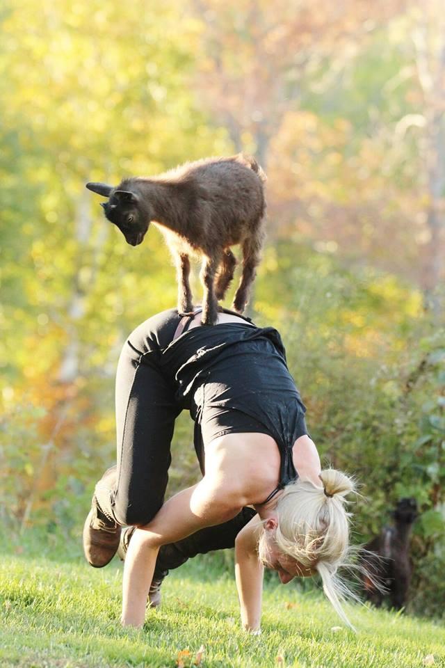 tayloe-goat-yoga.jpg