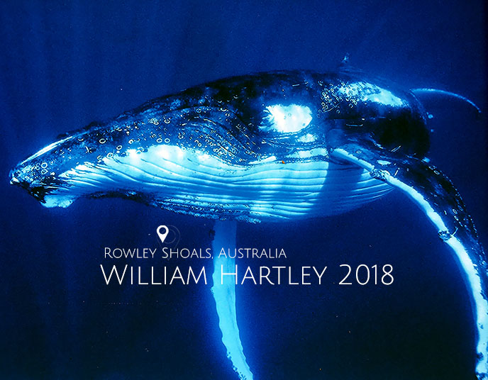 SEA_whale.jpg