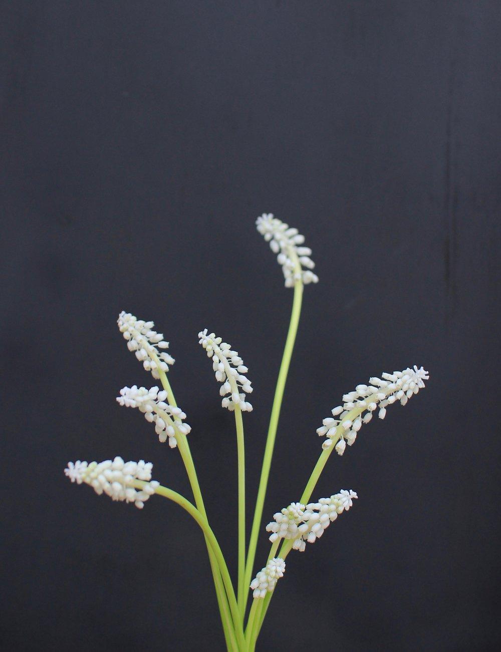 MUSCARI, white