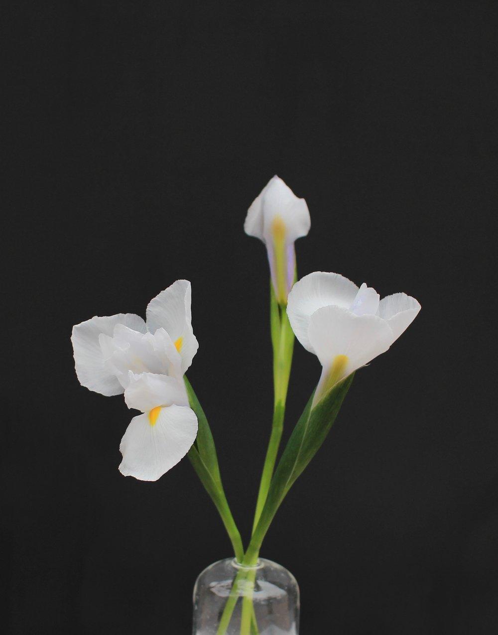 DUTCH IRIS, white