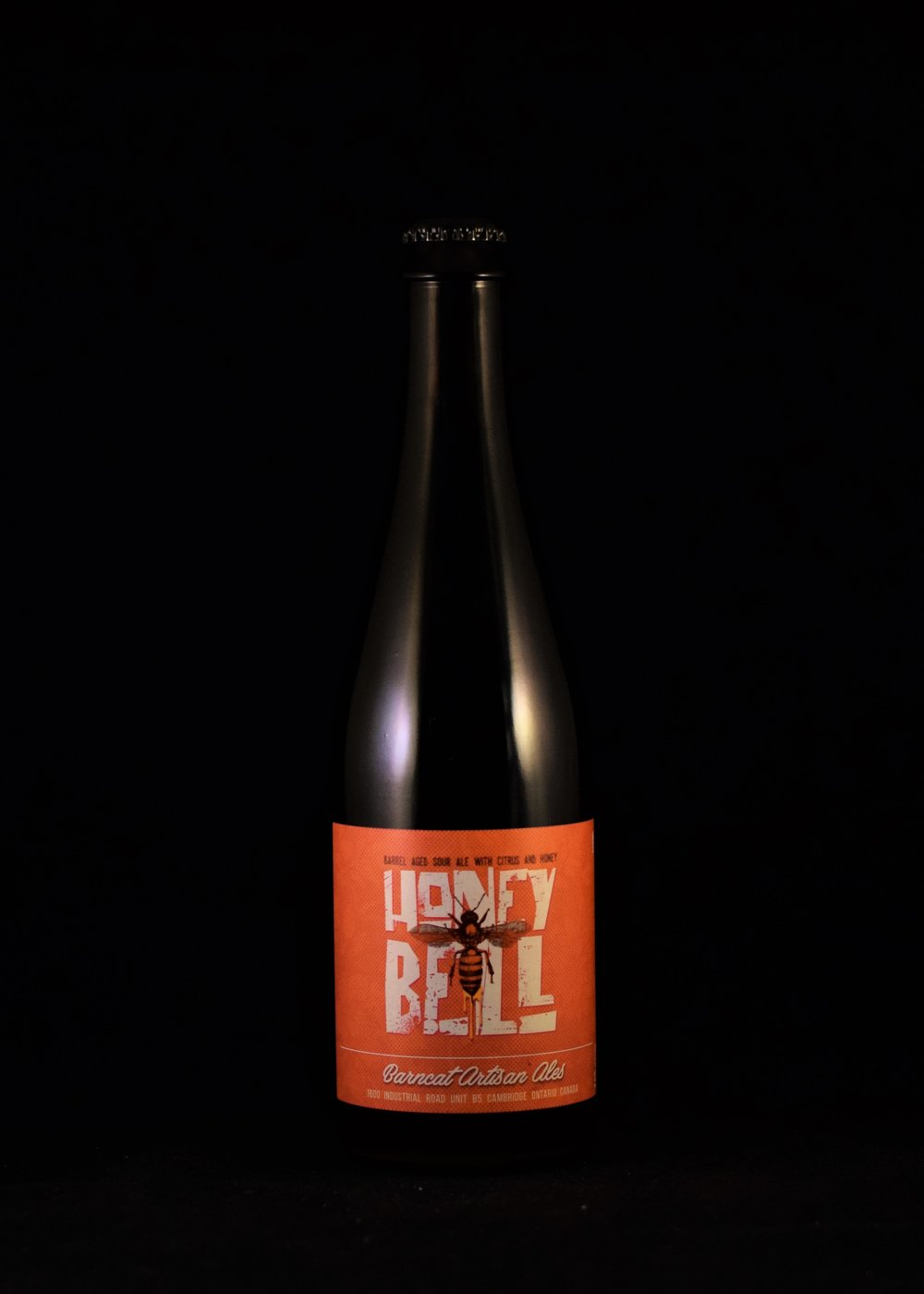 Barncat - Honey Bell