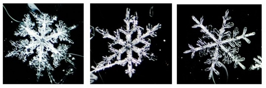 trio-of-snowflakes-Katie-Young.jpg
