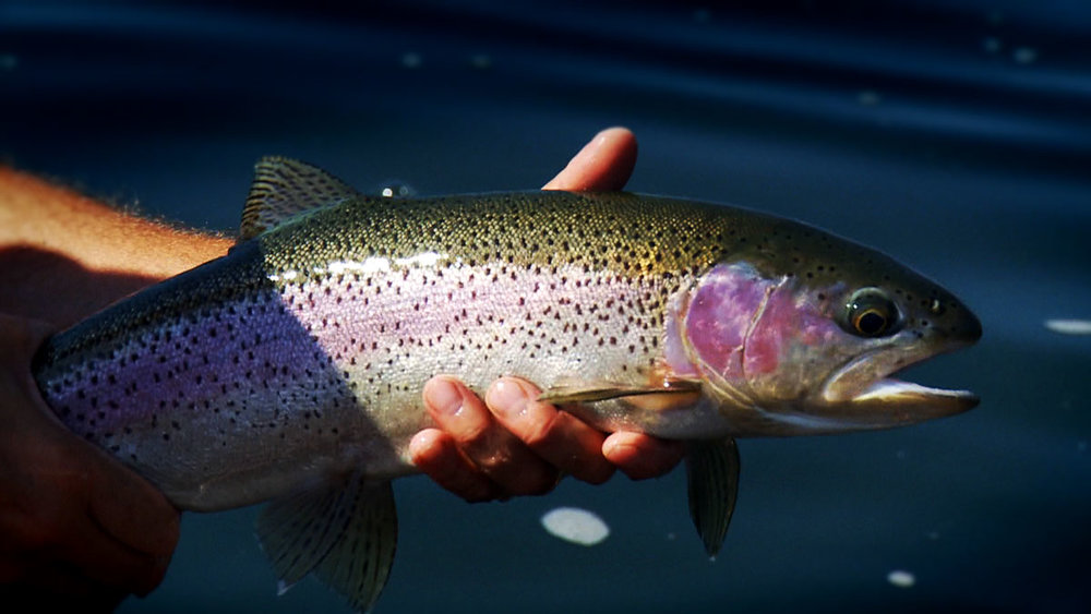 dwayne-holding-rainbow-02-web.jpg