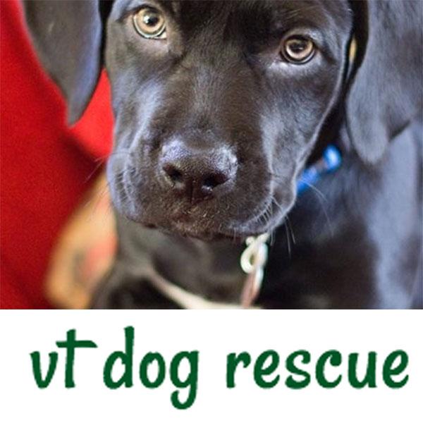 VT-dog-rescue.jpg