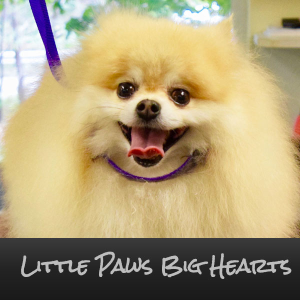 Little Paws, Big Hearts Pekingese Rescue