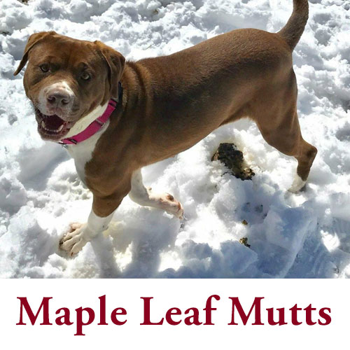maple-leaf-mutts.jpg