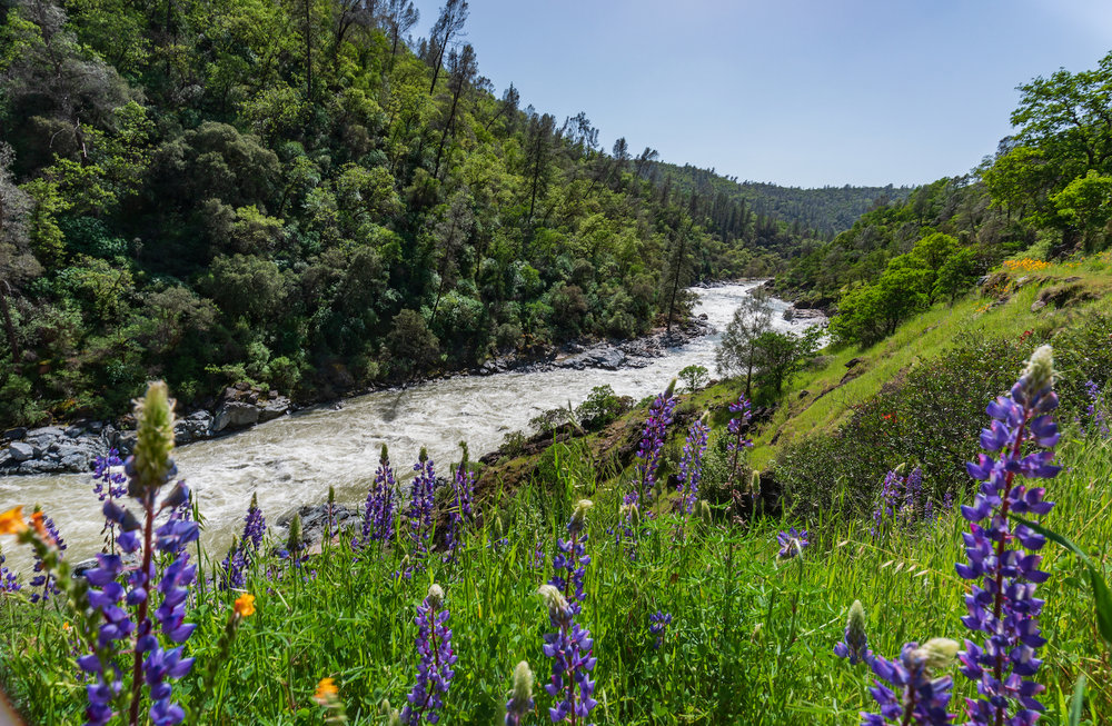 Wild in Us - Nature Retreats for Women - UPCOMING: May 10-12, 2019BIG OWL RANCH, NEVADA CITY, CA