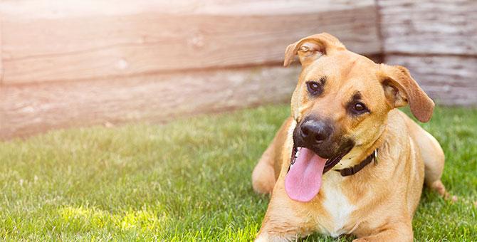 Dog Shelter 5.jpg