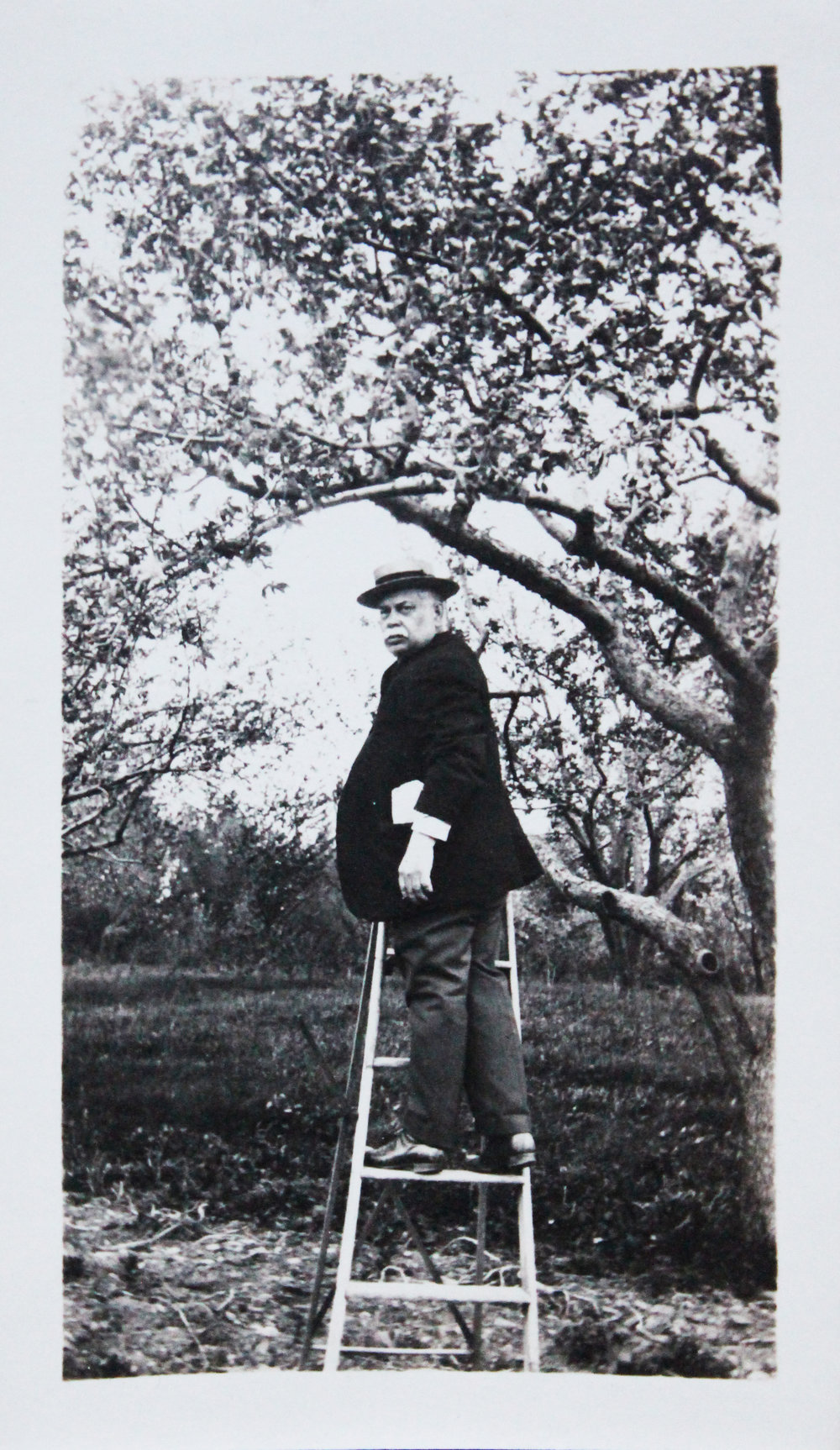 James orchard 2.75 x 4.5.JPG