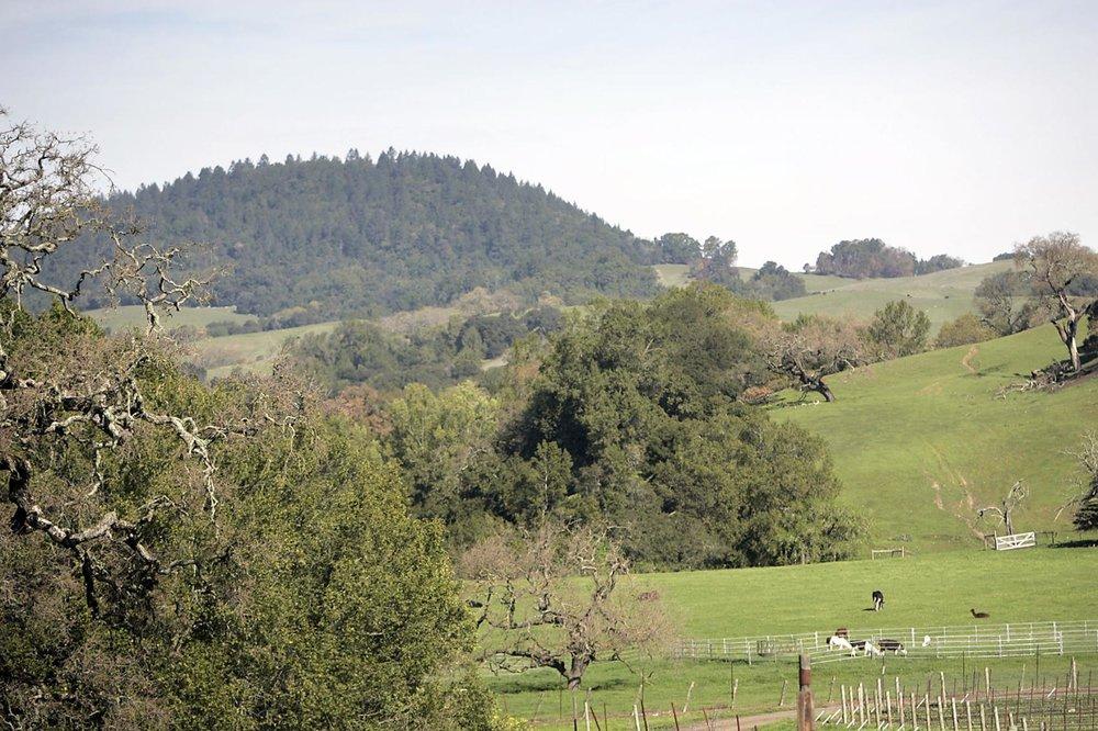 Oak covered hillsides on the outskirts of Napa.  J.L. Sousa, Register